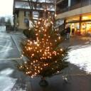 Erfolgreicher Weihnachtsbaumverkauf